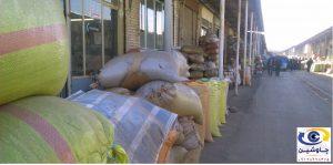 خرید تخمه آفتابگردان روغنی